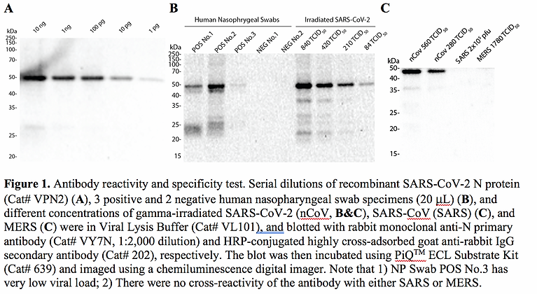 Human Nasopharyngeal Swab Lysate #VCS1