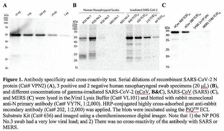 GenuIN® 4x Viral Lysis Buffer #VL101