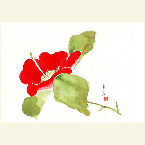 Red Camellia (set of 5 greeting cards)