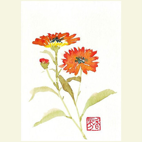 Calendula (set of 5 greeting cards)