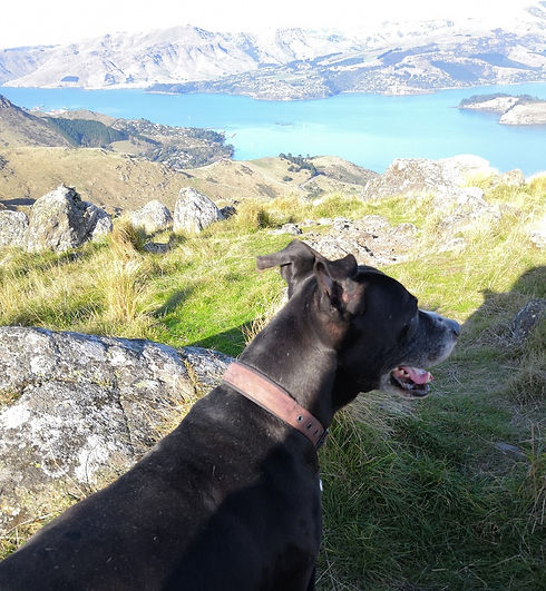Dog walking christchurch