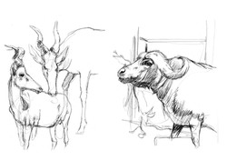 animals sketch