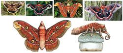carousel caterpillars