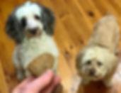 Chicken & Nut Butter Dog Cookies