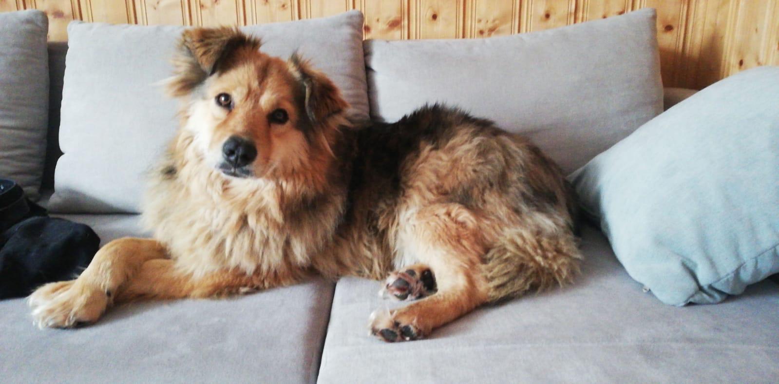 Dingo jetzt Buddy