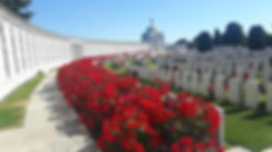 Tyne Cot Cemetery Passchendaele a sea of red roses amongst the headstones