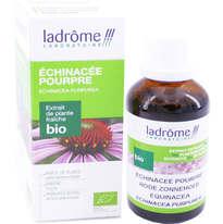 echinacee-echinacea-plantenextract.jpeg