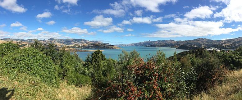 Panoramic View of Akaroa, New Zealand