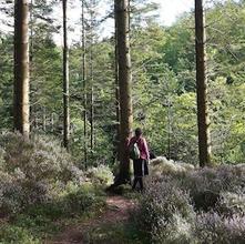 Dyfnant Forest Walk
