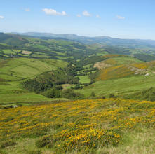 Glyndŵr's Way