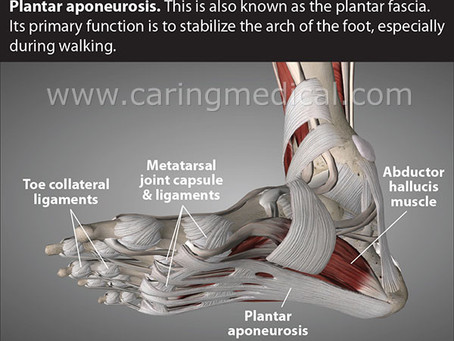 What is Plantar Fascia?
