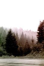 Black Forest, 2020