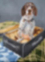 dog in suitcase small.jpg