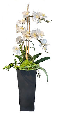 TALL VASE WITH WHITE ORCHARD & SUCCULENTS
