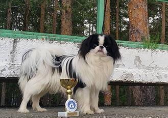 Республиканская выставка собак-компаньонов, 29 мая, г. Борисов.