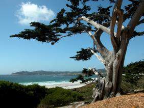 Cypress at Carmel Beach