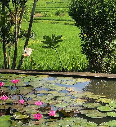 Bali-Mentoring-vogel-IMG_2221.jpg