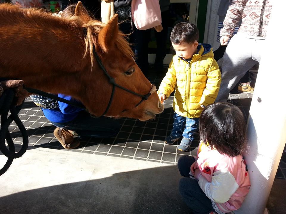 大きな馬とのふれあい