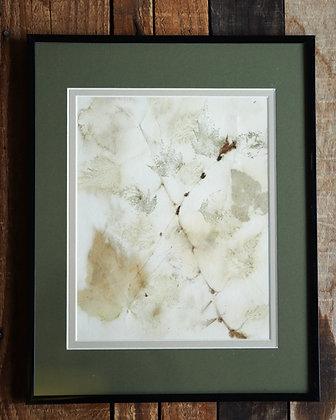 Framed Eco Print