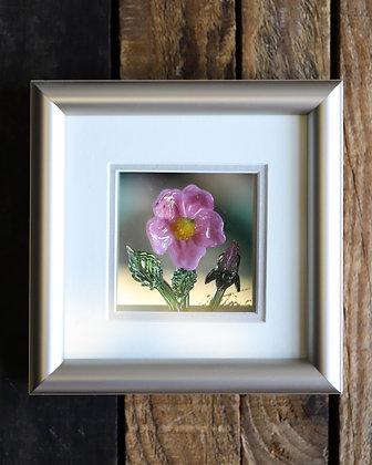Framed Glass Wild Rose