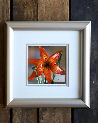 Framed Glass Tiger Lily