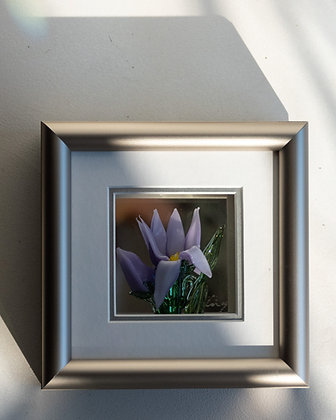 Framed Crocus Flower