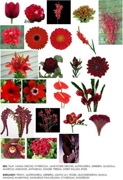 Red and Burgandy Flowers