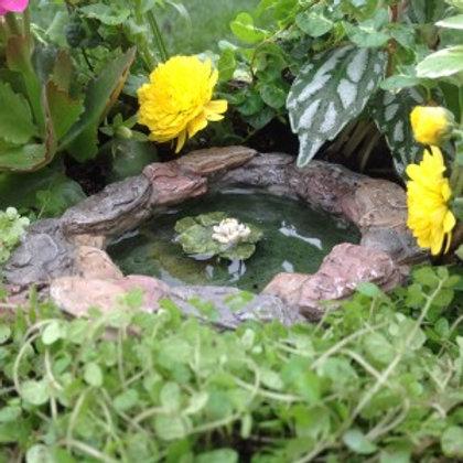 Lily Pad Pond