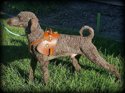 Dog Harness full