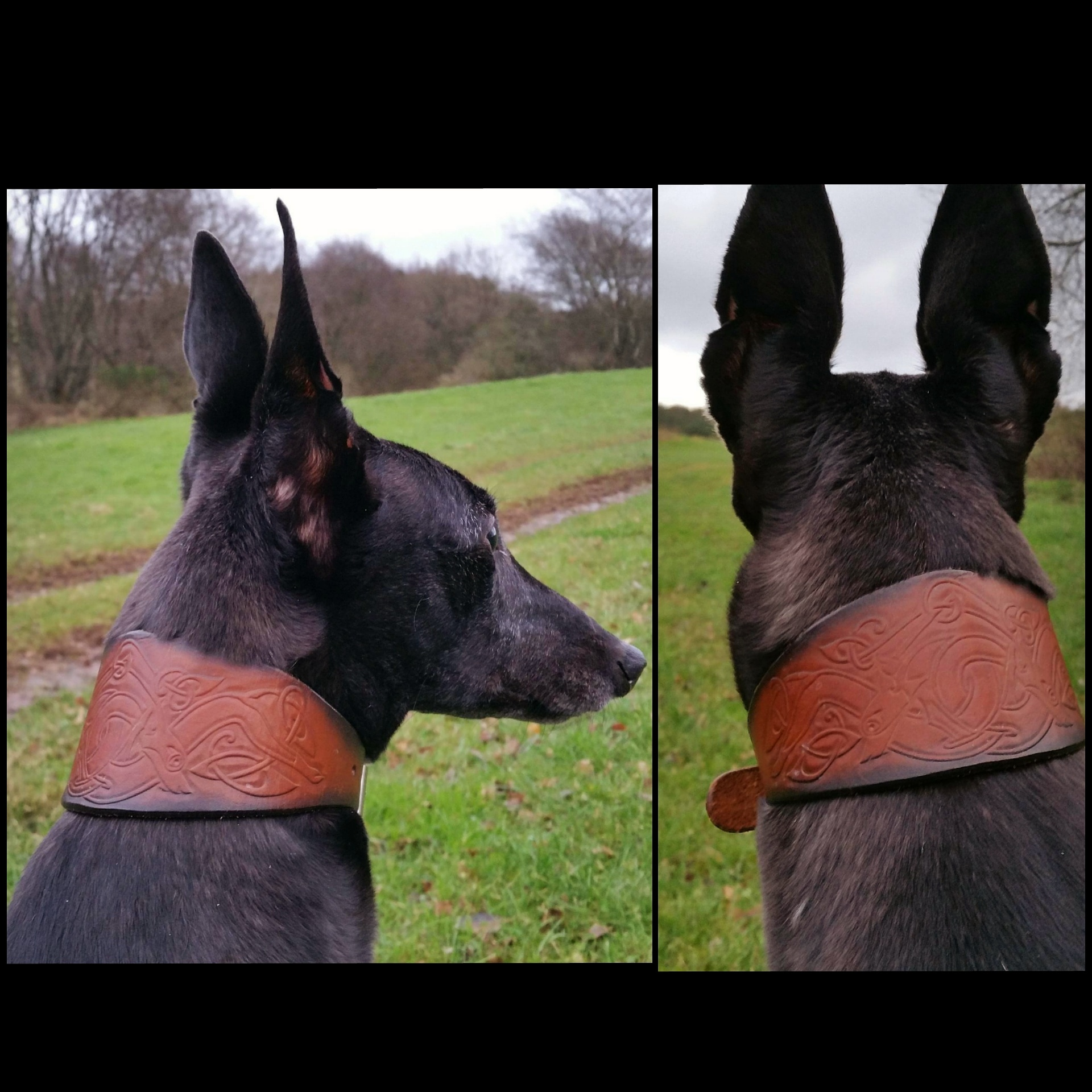 Greyhound Collar