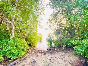 川へ続く小道.jpeg