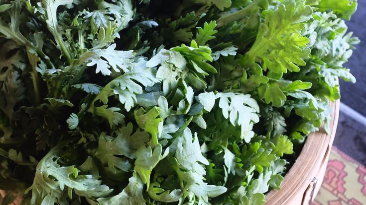 冬季限定、春菊の水餃子の販売を開始します。