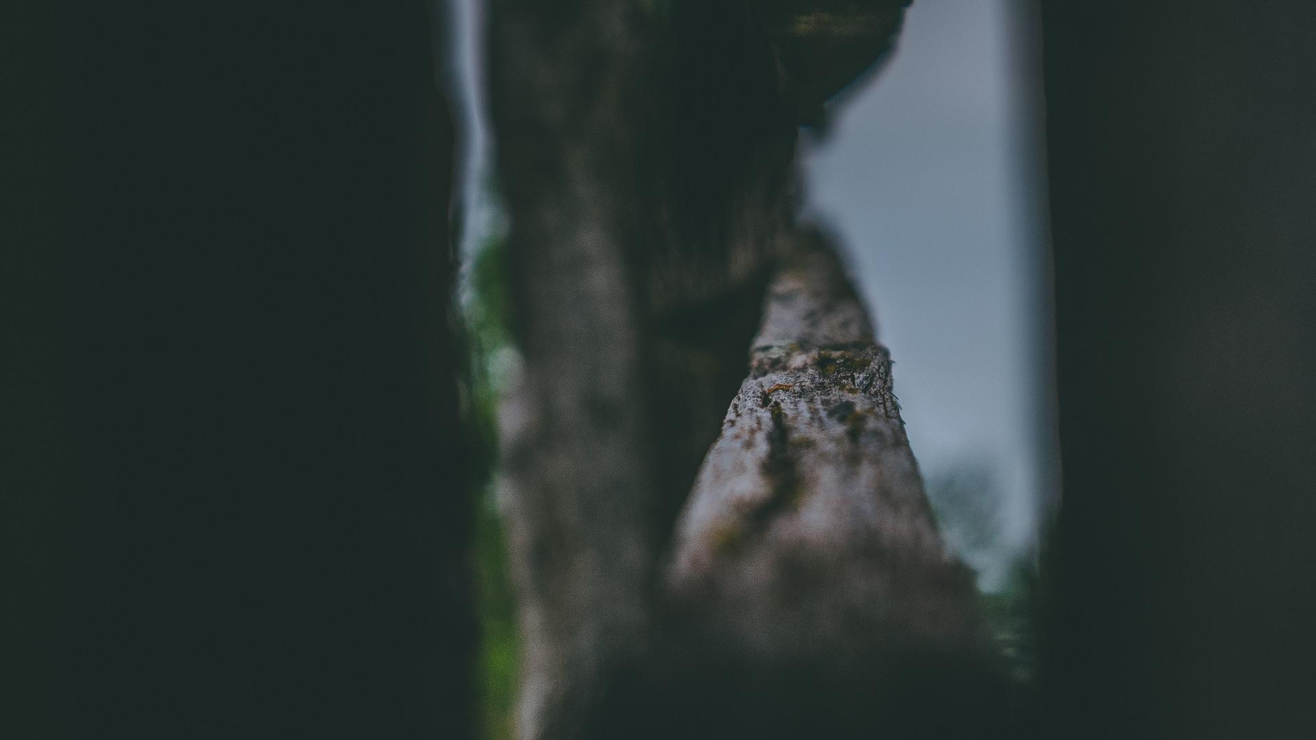 Shallow Wood.jpg