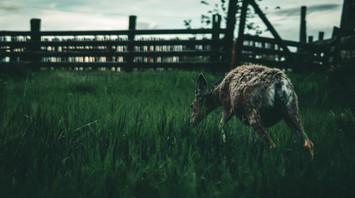 Deer_7.jpg