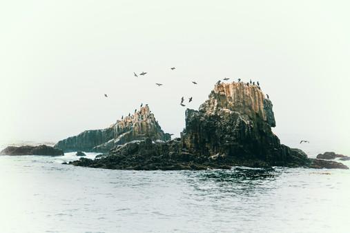 SEAL_ROCK_WHITEOUT.jpg