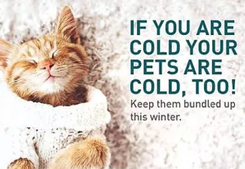 Pet Cold Too.png