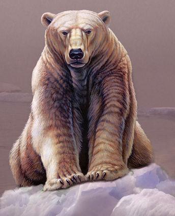 Cliff Bonamie Polar Bear.jpg