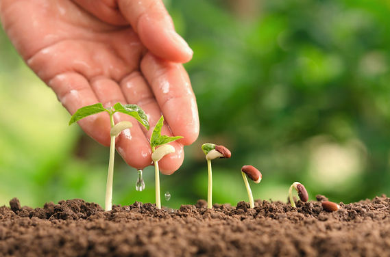 agriculture-hand-nurtur-watering-young-p