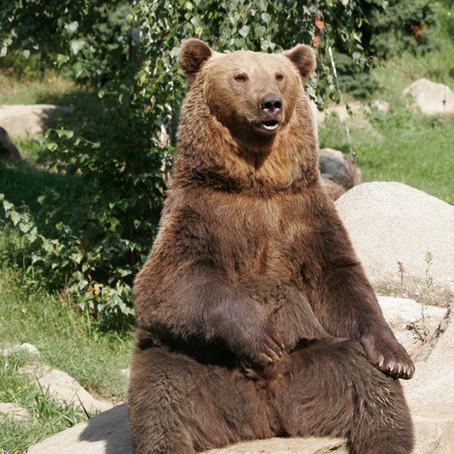 Brainstormen zonder beren op de weg