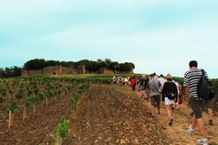 La randonnée en Bresse Haute Seille