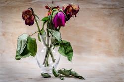 flower-316437