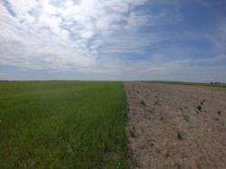 May 2nd 2021_cover crops trials.JPG