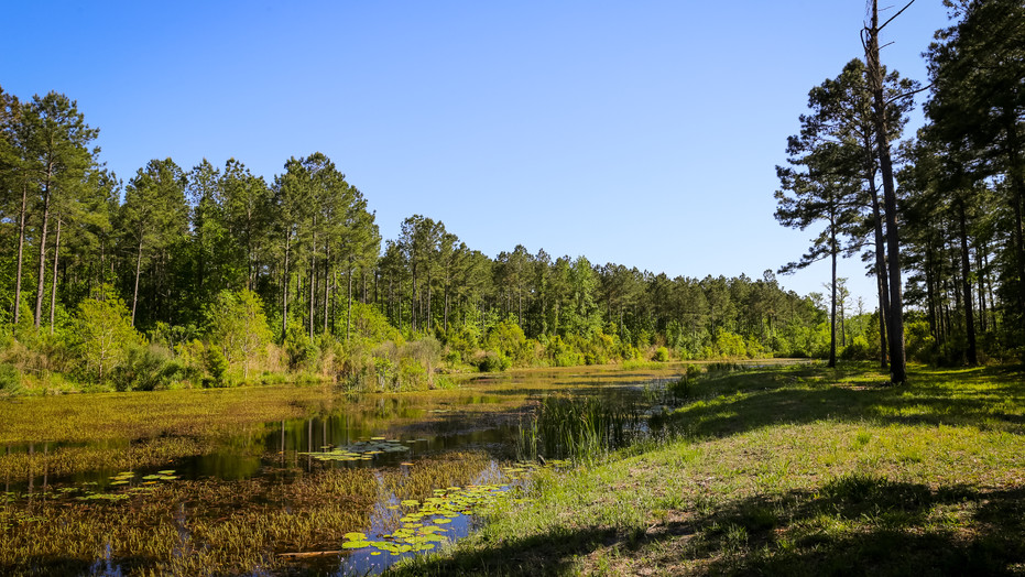 547± acre strategic timber and recreational property located in one of South Carolina's historic plantation neighborhoods north of Georgetown and bordering several riverfront plantations along the Pee Dee and Black Rivers.