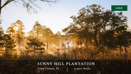 Sunny Hill Plantation is located in northeastern Tallahassee, Florida, just south of Thomasville, Georgia, in the very core of the Red Hills plantation belt.