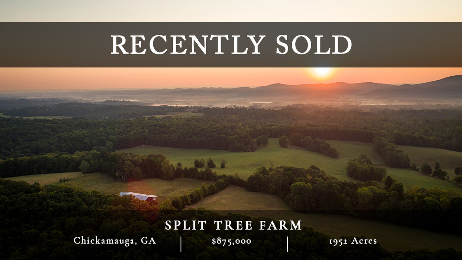 195± acres in the incredibly gorgeous McLemore Cove.  25 minutes to Chattanooga.  1.75 hours from Atlanta.  Spectacular views of surrounding mountains.  Rolling terrain.  Excellent building sites.  In same family since 1870s.