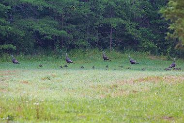 Turkey Ridge00004.jpg