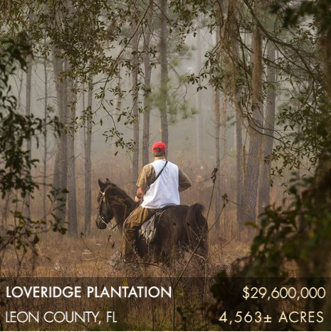 Loveridge Plantation is a 4,563± acre turn-key wild quail plantation located in the heart of the Red Hills plantation belt and bordered by other similarly exceptional quail plantations. The plantation has been intensely managed for quail for nearly 100 years and all 14 courses on the plantation consistently produce strong bird numbers. The landscape is high, rolling, and open with longleaf, shortleaf, and slash pines and the occasional stately oak. The property's Lake Thompson is a historic and renowned 100± acre duck hunting impoundment. With an incredible view, the main house is situated on a ridge along the 1.25± miles of frontage on the 6,000±acre Lake Miccosukee. Located on the Florida side of the plantation belt, its location in the heart of the Red Hills is convenient to both Tallahassee and Thomasville's amenities.