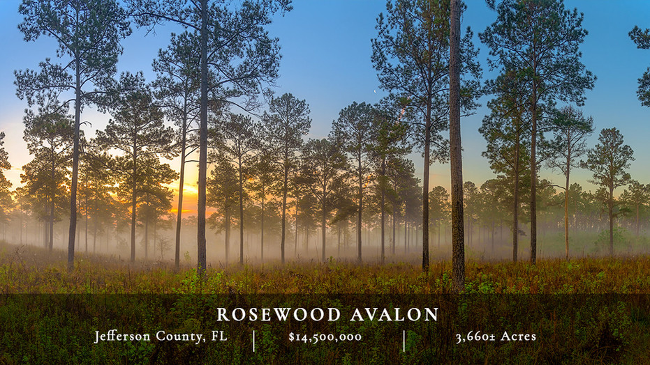 Rosewood Avalon is a beautiful Red Hills quail plantation consisting of 3,660± acres in Jefferson County, Florida, and in a neighborhood of other high-quality plantations such as Turkey Scratch, Oak Hill, El Destino, and Pinewoods.