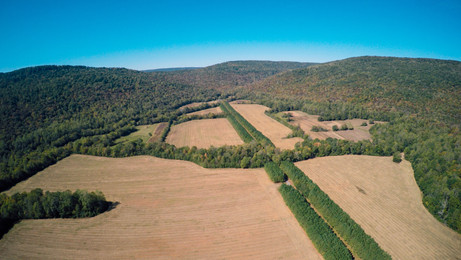 Located in northeast Alabama, this gorgeous 840± acres is tucked into the head of Bennett's Cove.  Consists of farmland, wildlife food plots, and part of the surrounding mountain.  Peaceful setting with great views of surrounding Cumberland Plateau.