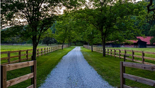 The Horse Farm is a gorgeous 221± acre equestrian farm located just minutes from Nashville and Franklin, Tennessee, near the charming community of Leiper's Fork. The farm is characterized by an array of rolling hills, mature hardwood forests, lush green pastures and a babbling creek. The Horse Farm is more than adequately equipped to handle the most dedicated equestrian enthusiast. The property currently includes a modest equestrian facility with three barns, but could easily be expanded to become a world class facility. There are 50± acres of pastures that are well fenced and ready to accommodate your four-legged friends.